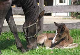 Aviana Bey & 2003 Filly