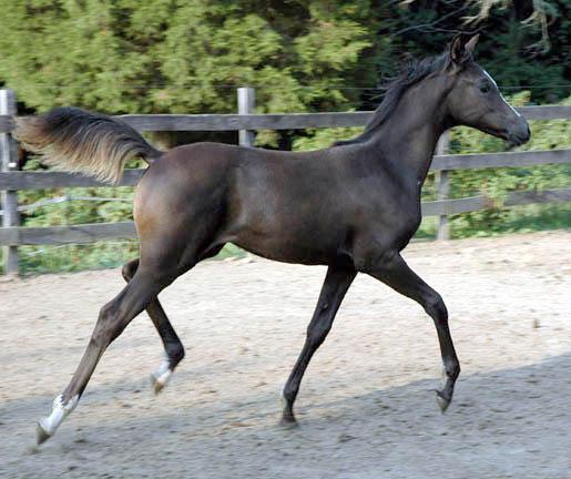 Cedric, Wild Silver Beyviana-3mths-16