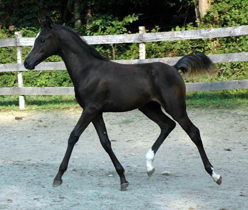 Cedric, Wild Silver Beyviana-3mths-27