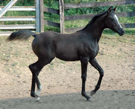 Cedric, Wild Silver Beyviana-3mths-57