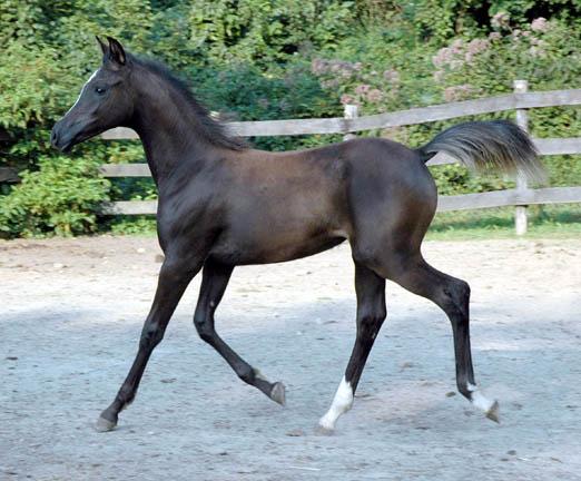 Cedric, Wild Silver Beyviana-3mths-62